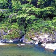 08 徳島県 鮎喰川上流 春