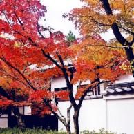 09 京都