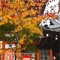 02 京都八坂神社