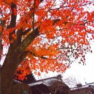 04 京都八坂神社