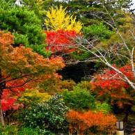 06 円公園紅葉