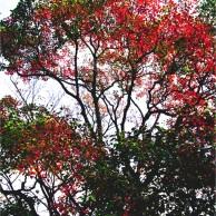 07 徳島公園紅葉