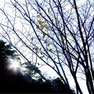 08 徳島公園紅葉