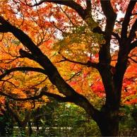 10 円山公園